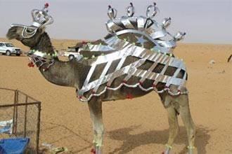 Memri_camel_contest